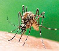 Denugemosquito